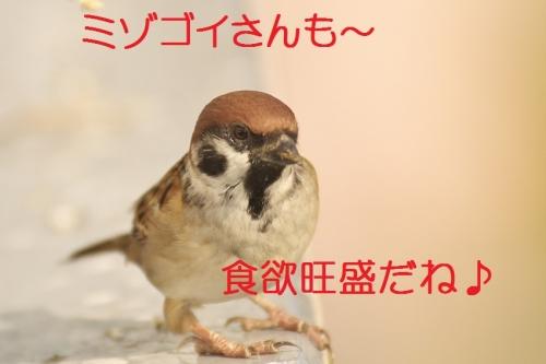 160_201311051707081e1.jpg