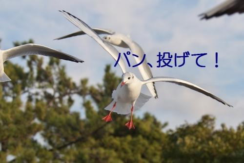 160_20140104180112b78.jpg