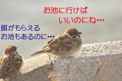 160_20140107184102dd1.jpg