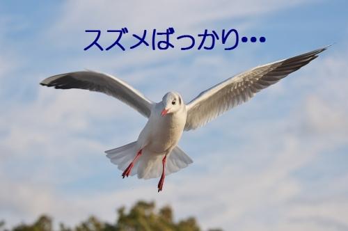 170_20140104180149931.jpg