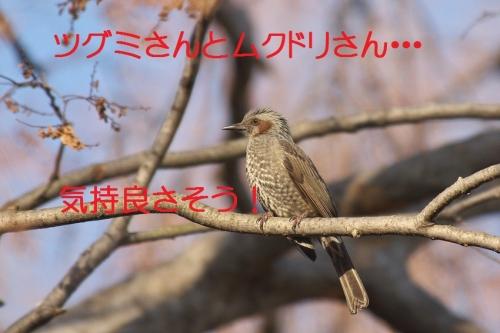 170_201401312134127a3.jpg