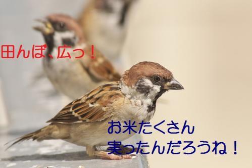 180_201309272123385bc.jpg