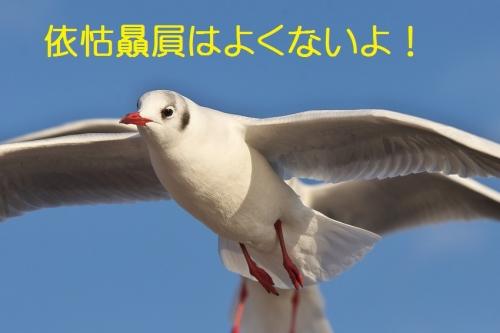 180_201401041801527c9.jpg