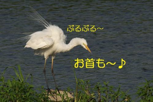 190_20130803193051b3b.jpg