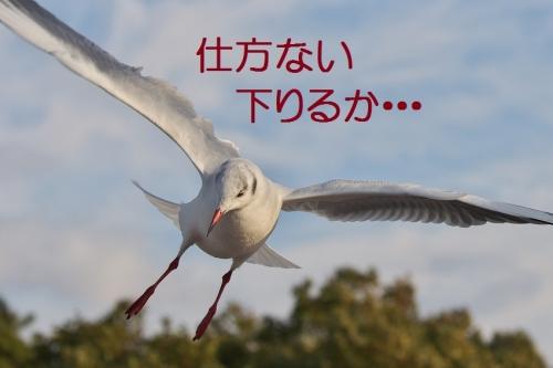 190_20140104180154b4f.jpg