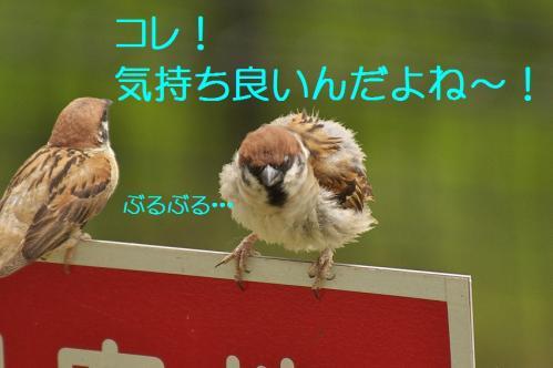 200_201308031932477f9.jpg
