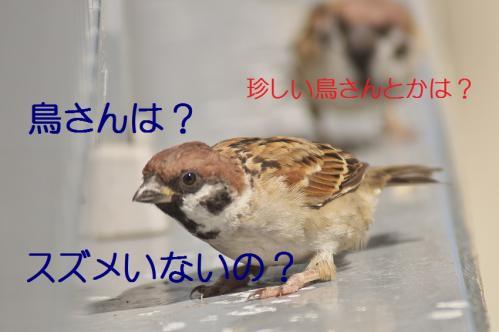 200_20130927212416e44.jpg