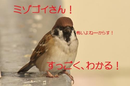 200_20131106210858732.jpg