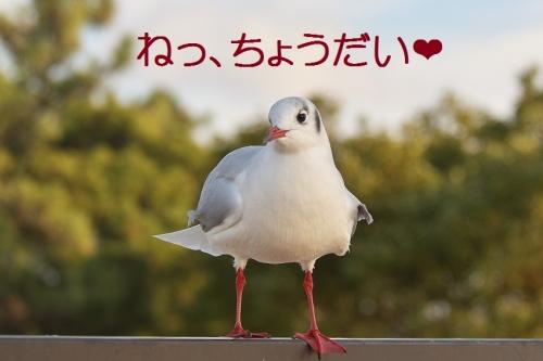 200_20140104180157b6d.jpg