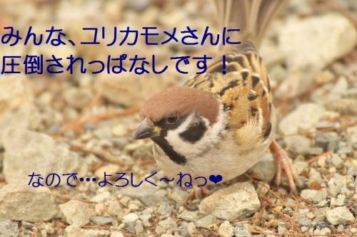 200_201401131831281e5.jpg