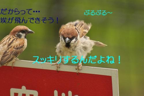 210_20130803193250af4.jpg