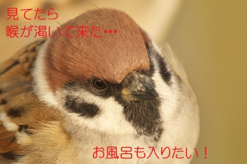 220_20140131213506fdf.jpg