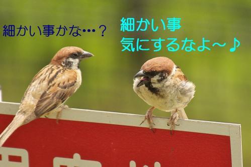 230_20130803193253d94.jpg