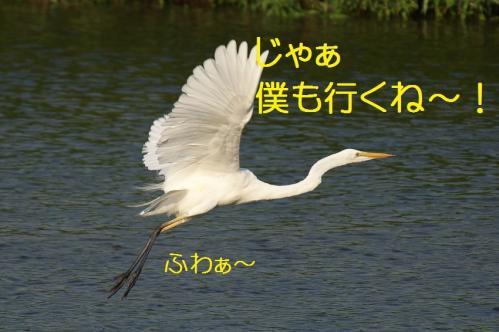 270_20130803193401c6d.jpg
