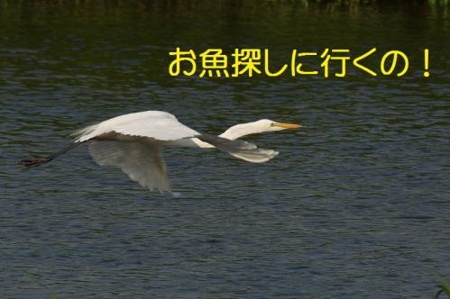 280_20130803193404ac6.jpg