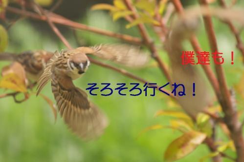 330_20130803194632063.jpg