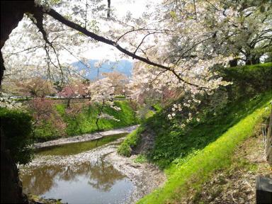 桜mini