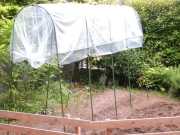 雨除けをかぶったトマト苗