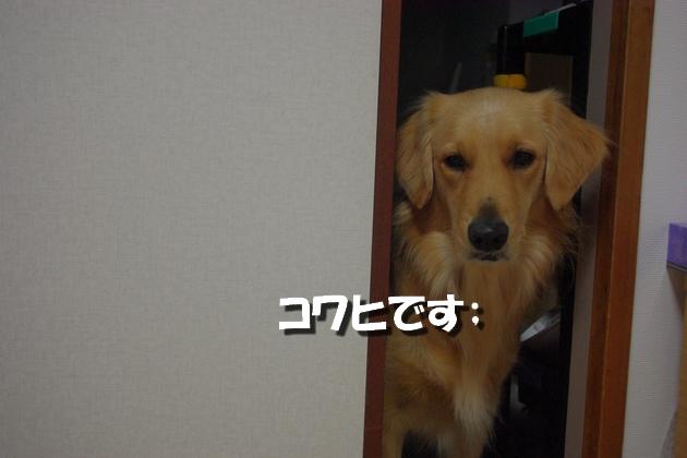 IMGP4603.jpg