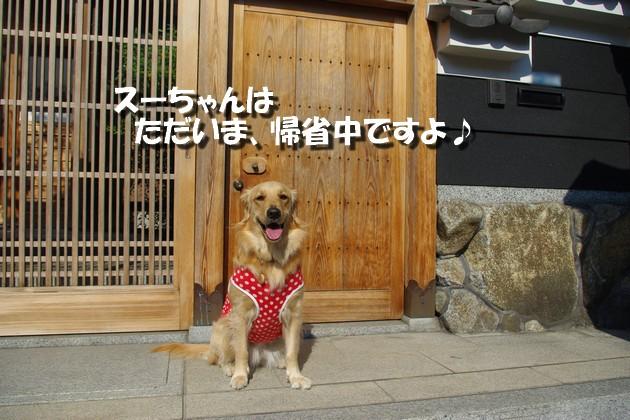 IMGP4646a.jpg