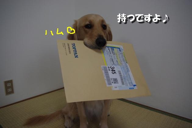 IMGP4788.jpg