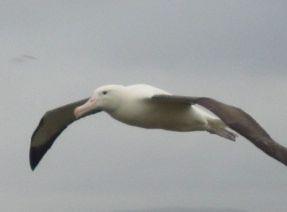 albators03