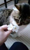 ら桜嗅ぐ_convert