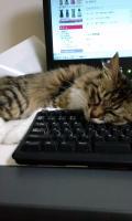 らキーボード上寝る2_convert