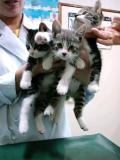 子猫3匹_convert