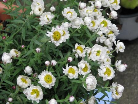 2010.03.08-花かんざし