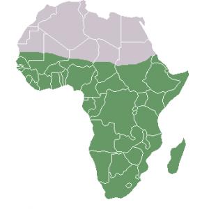 ブラックアフリカ