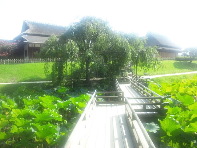 後楽園蓮池