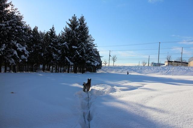 aoba 1月 042 blog