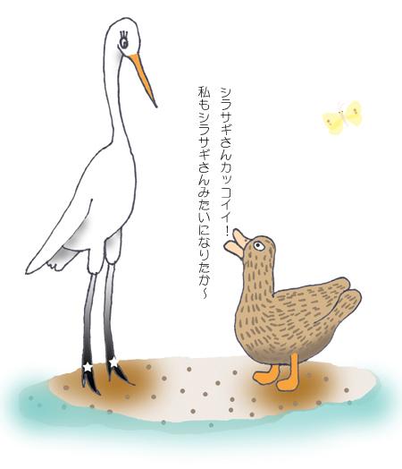 a-sirasagi-kamo-4.jpg