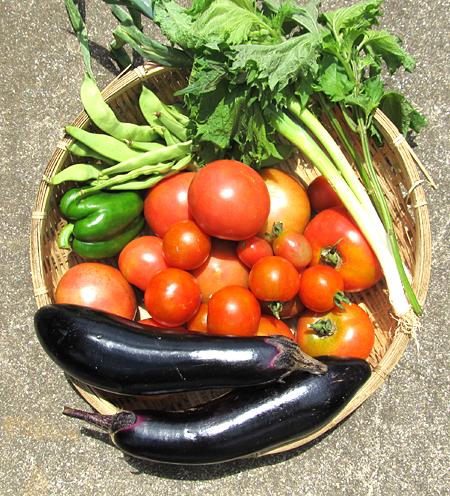 c-tomato-9.jpg