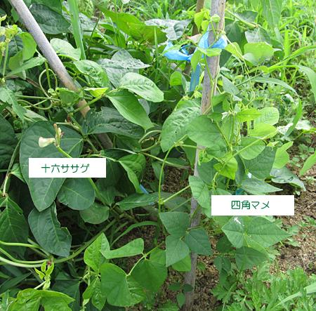d-sikakumame-2.jpg
