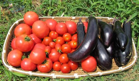 d-tomato-3.jpg