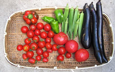 d-tomato-5.jpg