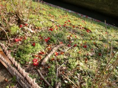 草の中の椿