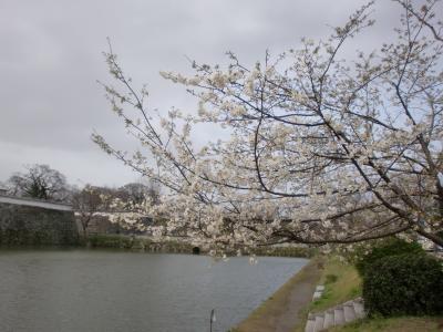 0316桜3