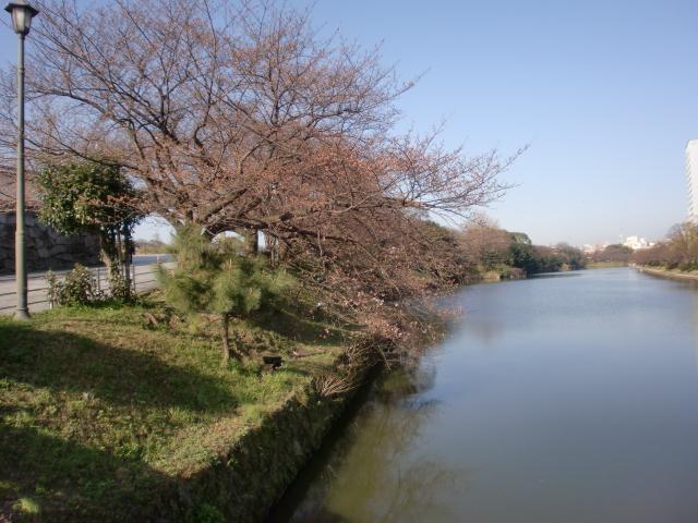 20100319桜 009