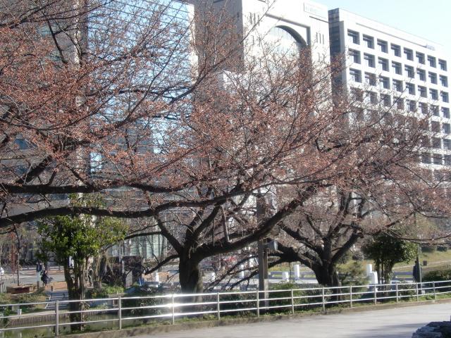 20100319桜 006