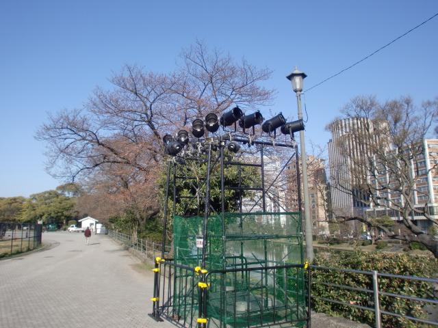 20100319桜 004