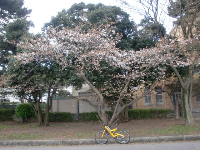 100320大濠公園桜スケッチ 005
