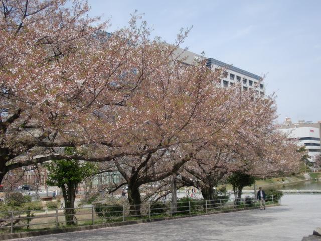 20100406春 001