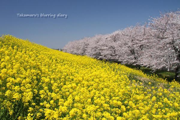 一般的な熊谷桜堤とは一味違う景色を探して歩き続けました・・・疲れた