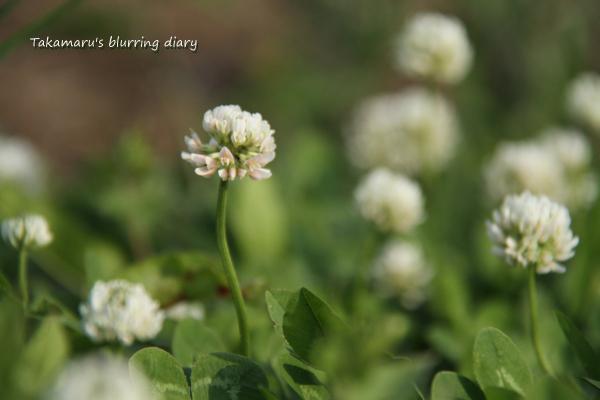 雑草の花は、息が長いですね