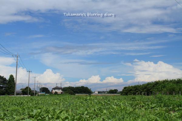 下の緑は雑草が生えた畑、夏野菜とかだと雰囲気良かったのですけど