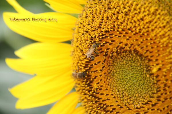 ハチは大忙し