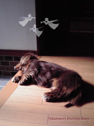 ちょっと「フランダースの犬」っぽかったものですから